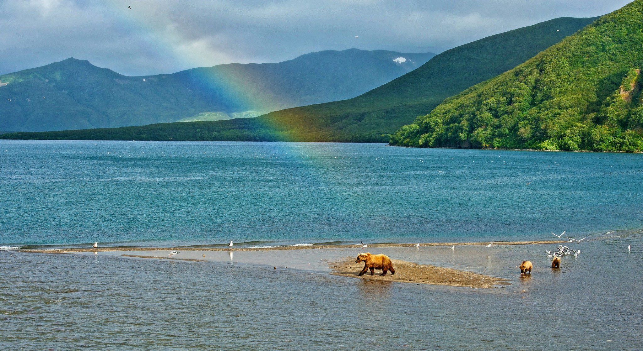 Rainbow and Bear, Kuril Lake, Kamchatka, Russia